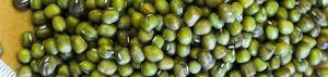 Organic Mung Beans of the Burkin variety