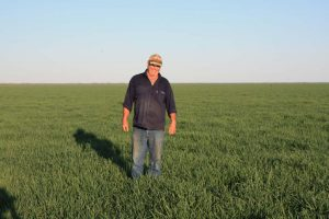 Peter standing in his young green spelt crop