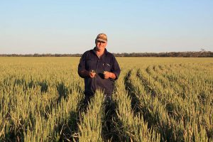Peter in his soft wheat crop.