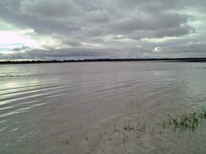 Rob's buckwheat crop is flooded