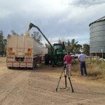 小麦の積み込みの様子
