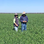 Geoff with his wife Shirl in their recent wheat crop