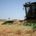 Graham begins the harvest