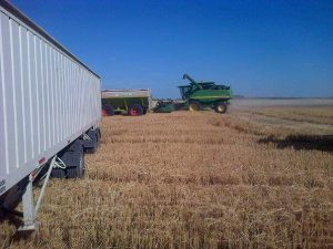 the hopper is filled by the harvester