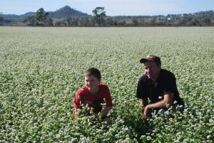 Damien in the buckwheat field with his son
