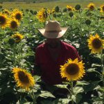 Jules in the sunflowers