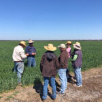 We visited Geoff and Shirl at their farm to check out their excellent 2020 crop