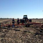 수확이 끝난 후, Mike는 토양 생산력을 높이기 위하여 멀치로 그루터기를 덮는다.
