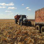 チェイサートレーラから移された穀物はトラックで製粉所まで運ばれる。