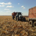 谷物从粮食车上被转移到卡车上,然后运往工厂。