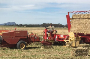 Harvesting the linseed