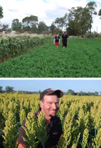 In the sorghum fields