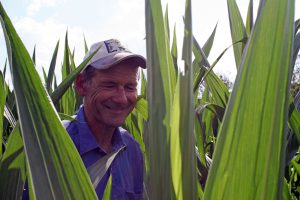 Steve in the maize