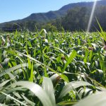 The farm is in a valley that is part of the Lockyer Valley.