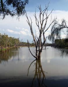 The lagoon separates the conventional paddocks from the organic