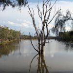 泻湖把传统的农田和有机农田隔开
