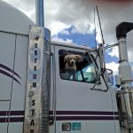 トラック運転手の相棒