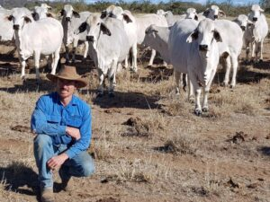 Matt with the cattle in the paddock
