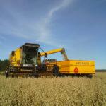 September harvest of the oats