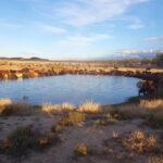 早朝、ダムの水を飲む牛たち